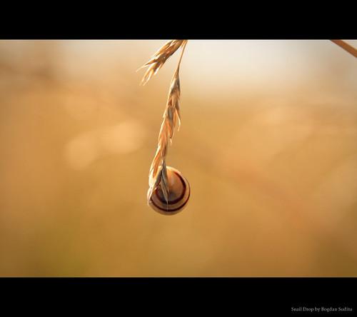 Snail drop