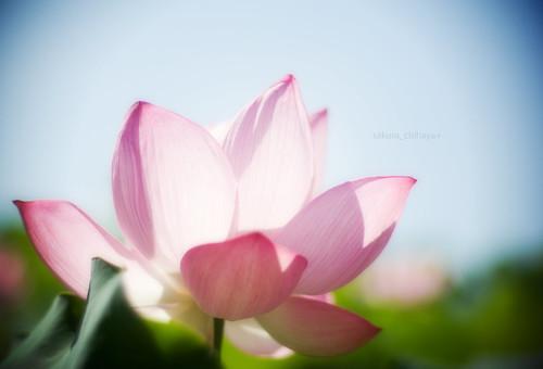 2541 : Lotus2008#7