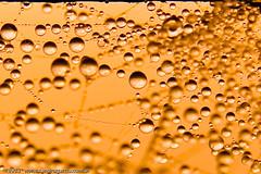 Bubble Sunrise ( SandroG) Tags: sunshine rain fog sunrise buenosaires web drop amanecer bubble garcia gota burbuja sandro sanpedro supershot sandrog colourartaward sigma1770dcmacrof2845 safaribasanpedro