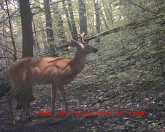 DGC_0001 6-pt Buck