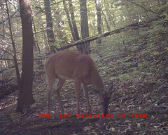 DGC_0018 6-pt Buck