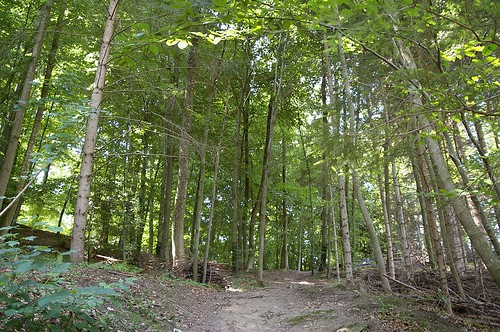 樹林, 其實樹林的另一邊就是城市了