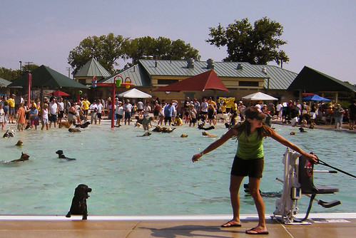 Madison's Goodman Pool Really Went to the Dogs on Labor Day