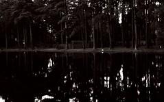 (davidfigueroa.) Tags: canon thewoods thelake 30mm 40d sometrees davidfigueroa andacabintoo
