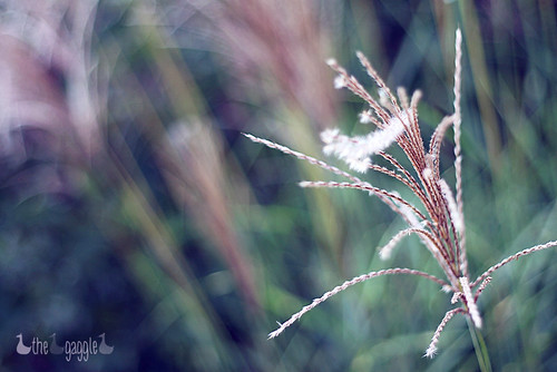 HBW - That one?