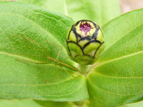 plant_bug