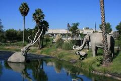 La Brea tar pits mammoths