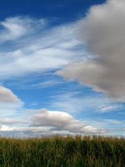 Punk (picbloom) Tags: sky cloud field rural canon landscape spain corn cloudy paisaje powershot cielo león maiz castilla g7 nuves mywinners aplusphoto wwwdporteirocom