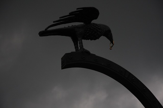Budapest Crow