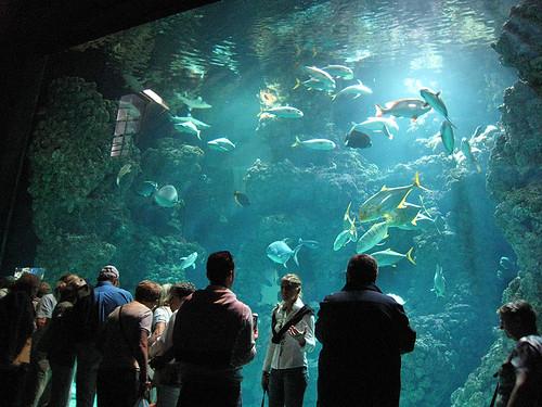 Oceanographic Aquarium Monaco