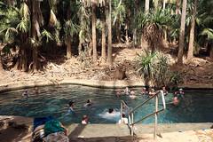 Mataranka Thermal Pool