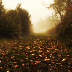 * (minarai) Tags: autumn leaves fog path grouplife