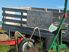 vg2953 (Lalie) Tags: iceland islande flatey breiafjrur