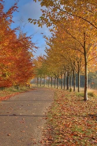 Wandlebury Autumn
