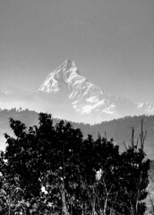 Machchapuchare  bw (David Fast) Tags: nepal asia sarangkot pokara himalayasn