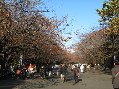 Autumn leaves at Ueno Park 4