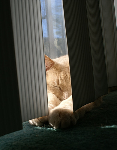 jeter in the blinds