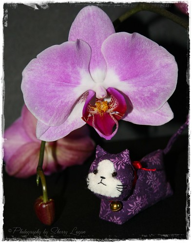 Suki enjoys a beautiful orchid as shade!