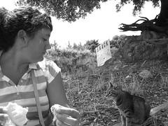 Le chat qui a faim (petitewebfleur) Tags: bw flora chat corse sandwich snack manger été jeunefille rayures regardenvieur