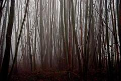 Quiet (cienne45) Tags: friends italy fog forest woods cienne45 carlonatale explore natale biella piedmont bose magnano spiritofphotography exploreexset explore1336