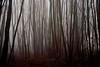 Quiet (cienne45) Tags: spiritofphotography carlonatale cienne45 natale piedmont italy magnano biella bose fog forest woods friends explore exploreexset explore1336 monastery bosemonastery monastero di