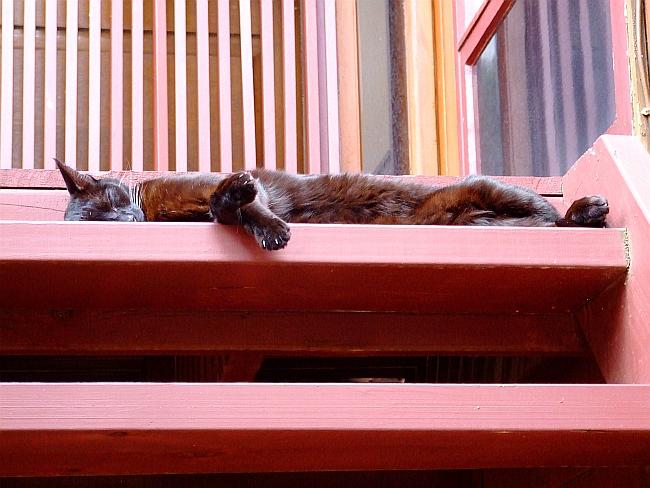 lazy lazy cat