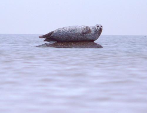 Seal 25Dec08