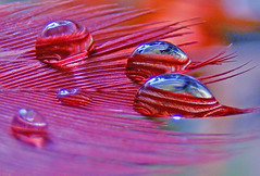 Waving goodbye to 2008 (fathunas) Tags: macro reflection water photoshop droplets drop birdfeather aplusphoto finepixs5700 fathun coloredfeather fathunas