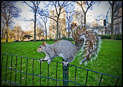 Squirrel In Central Park!! (Sr_Zeta) Tags: park new york nyc verde gris squirrel photographer d central sigma carlos 40 1020 ardilla nuez mmcanon marincarlosmarin