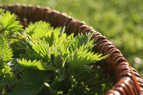 Les sauvageonnes les jardins de marie - Quand utiliser le purin d ortie ...