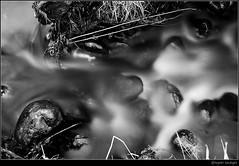 I. H U S H E D . S O U N D S .I (donpar) Tags: plants white black nature water canon flow leaf rocks stream long exposure pacific northwest sounds hushed abigfave diamondclassphotographer donpar