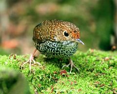#259  (John&Fish) Tags: bird birding taiwan best 2008 birdwatcher smrgsbord abigfave impressedbeauty ishflickr onephotoweeklycontest happinessconservancy mallmixstaraward