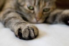 Pawzilla (debunix) Tags: cat pc emily 24mm