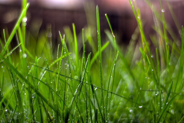 My Rain and My Grass