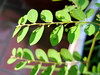 leaf and dot (parttimefarm) Tags: plants brasil leaf chacara echapora