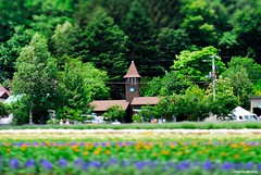 DS1_3482 (Mark.Weiching) Tags: japan hokkaido tiltshift   farmtomita nakafuranocho pcmicronikkor85mmf28d