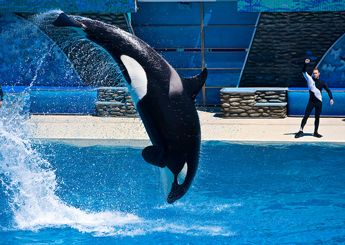 What InBev Should Do With Recently Acquired Shamu