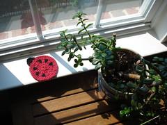 Ladybug Coaster 03