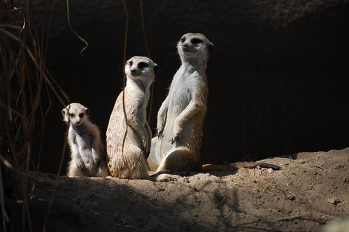 zoo 035