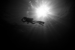 Freedom (lundysd) Tags: blackandwhite bw sunlight black silhouette contrast mexico cabo d70s dive scuba diving sunrays cabosanlucas sunball