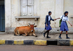 Badki & Chutki and the cow (Rick Elkins) Tags: girls india wall walking cow bravo uniform candid bangalore streetphotography sidewalk holdinghands karnataka schoolgirls curb holycow mywinners platinumphoto anawesomeshot superaplus aplusphoto rickelkins