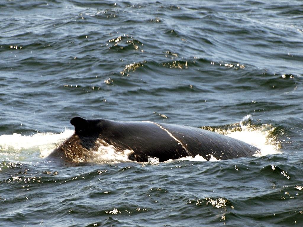 Whale Scar