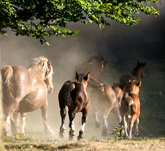 Horses (j.alber) Tags: light horses horse luz nature animals oneofakind natura basquecountry urbia realone naturesfinest supershot 10faves flickrsbest 25faves platinumphoto anawesomeshot impressedbeauty superaplus aplusphoto ultimateshot superbmasterpiece diamondclassphotographer flickrdiamond superhearts jalber tribesandhya excellentphotographerawards flickrfotoaward onlythebestare platinumheartaward goldstaraward oneofakid