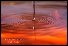 Sunset in the water (butacska) Tags: sunset orange usa color macro reflection nature water colors closeup sunrise gold photo droplets drops waterdrop sony drop drip photograph artists droplet naplemente szn highspeed waterdroplet goldenglobe srga narancs sznek arany makr tkrzds csepp vzcsepp vz goldenmix sonyalpha impressedbeauty superbmasterpiece macrophotosnolimits gotasdrops kzelkp bestminimalshot