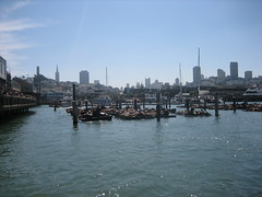 Pier 39 sea lions (Fisherman's Wharf, California, United States) Photo