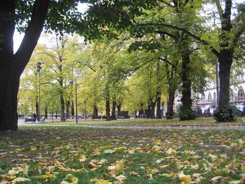 Syksy Johanneksen puistossa by Anna Amnell
