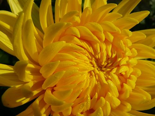 http://farm4.static.flickr.com/3207/2957482089_1fb92788bd.jpg