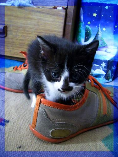 -MI zapato