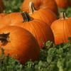 Welcome Great Pumpkin