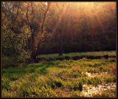 Codorus State Park (hannah.riedel) Tags: park lighting trees light sun green water big ray state pennsylvania sunny fave marsh rays marshy codorus abigfave